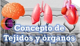 tejido y organo definición